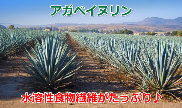 agave-inulin
