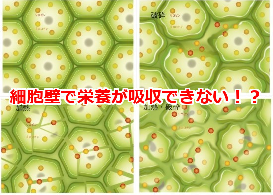 cell-wall